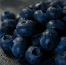 Fruit-1-3